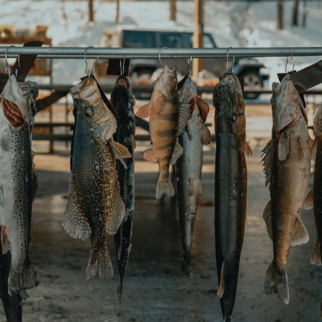 Fish freshly fished. Unfortunately you can't find that quality anywhere, but frozen fish is also a great choice.