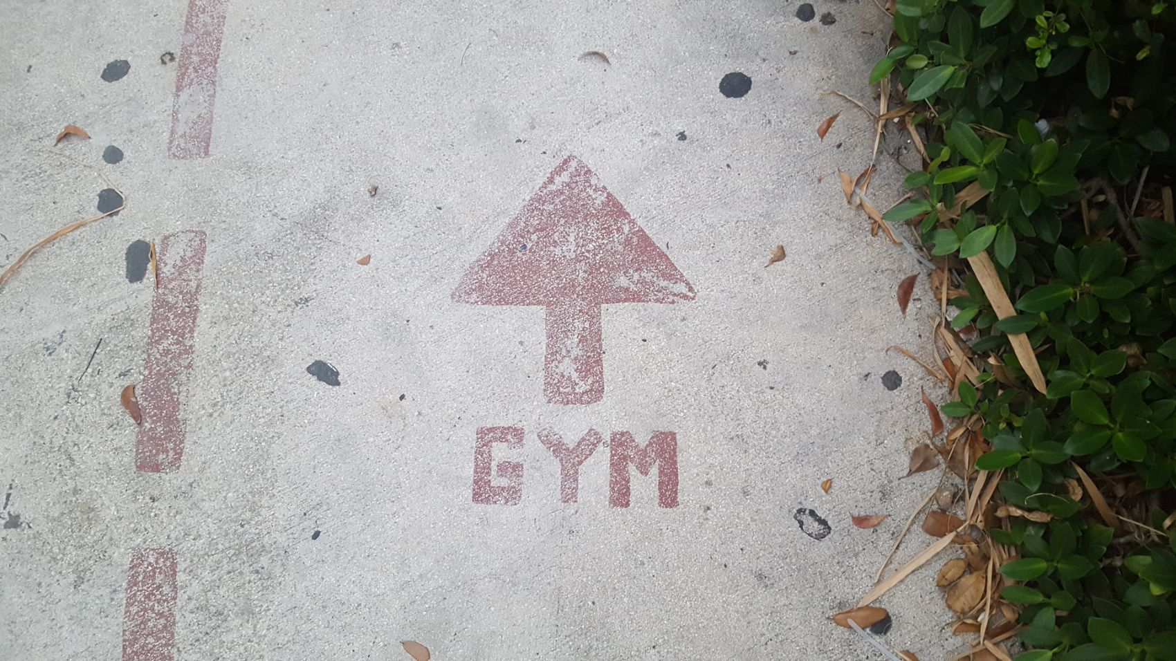 The Way to the Gym