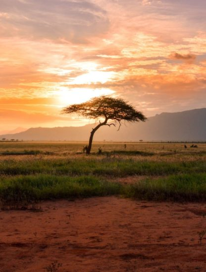 This image shows the east African savannah the birthplace of humans.