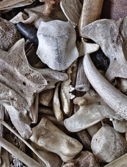 This image shows bones on the ground and is the image of my post about collagen and connective tissue in an animal-based diet.